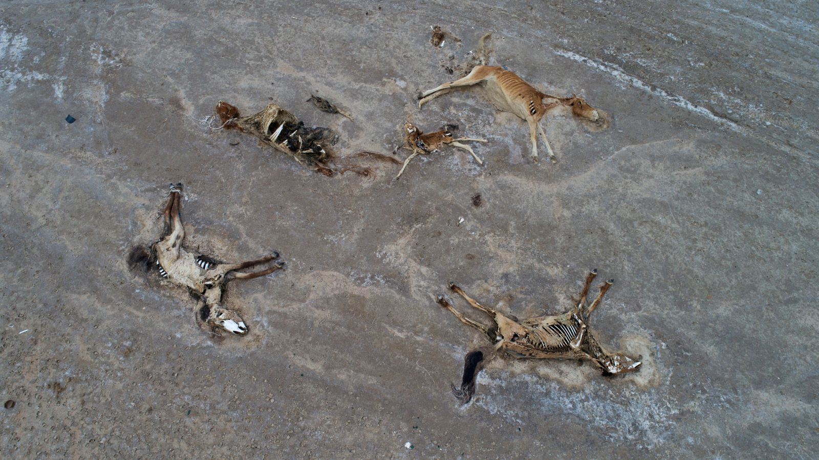 Severe drought causing livestock starvation affects herders in Kazakh province