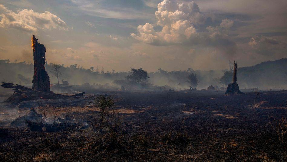 """Verbrannter Wald in Altamira, Bundesstaat Para: """"Wenn ein illegaler Siedler erst einmal ein Jahr im Busch sitzt, kriegt man ihn kaum noch heraus"""""""