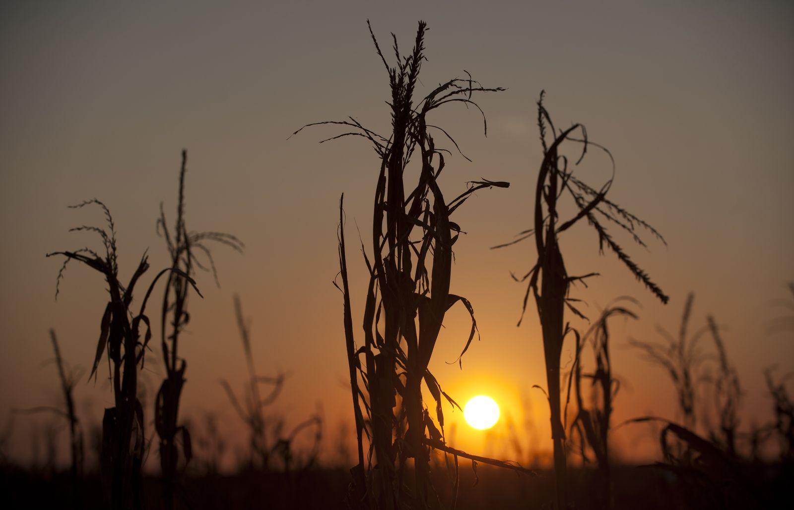 Dürre in den USA / Trockenheit