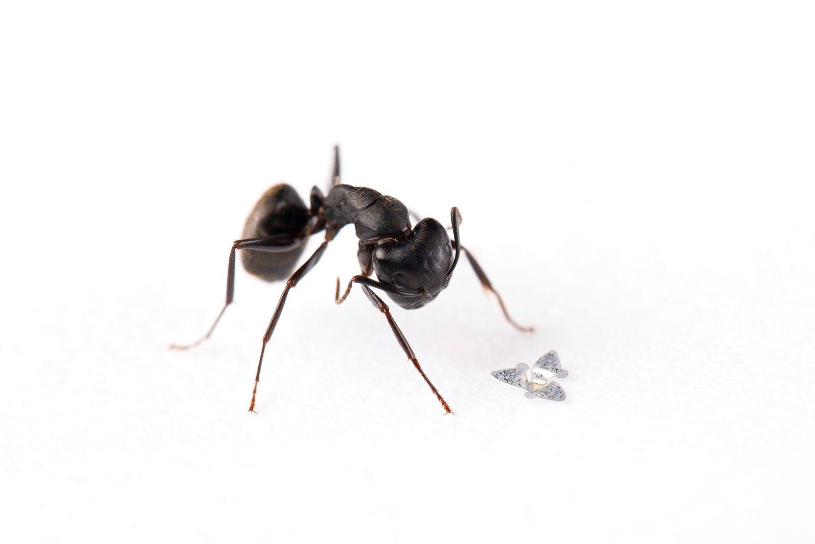 Fliegende Mini-Sensoren