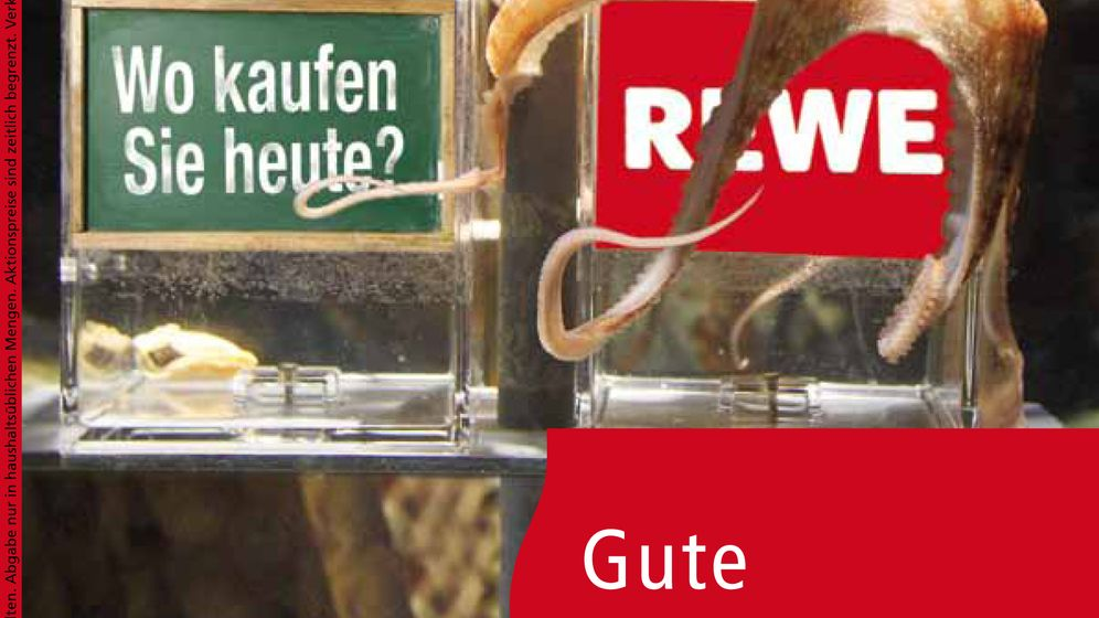 Photo Gallery: Paul the Octopus Pitches Rewe