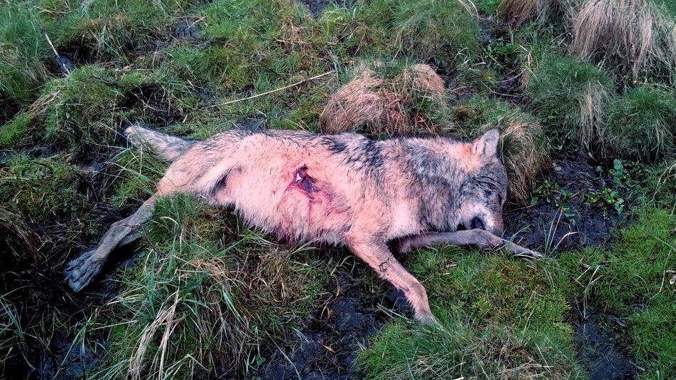 Kadaver im Westerwald: Schwerer Verstoß gegen Naturschutzgesetz