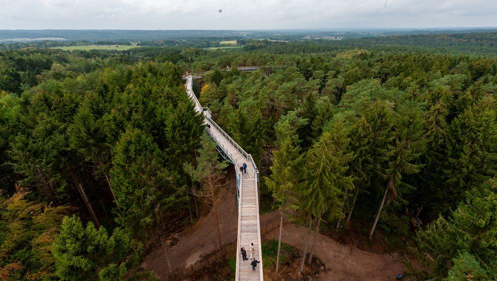 Neuer Baumwipfelpfad in der Lüneburger Heide: Spaziergang in Specht-Augenhöhe