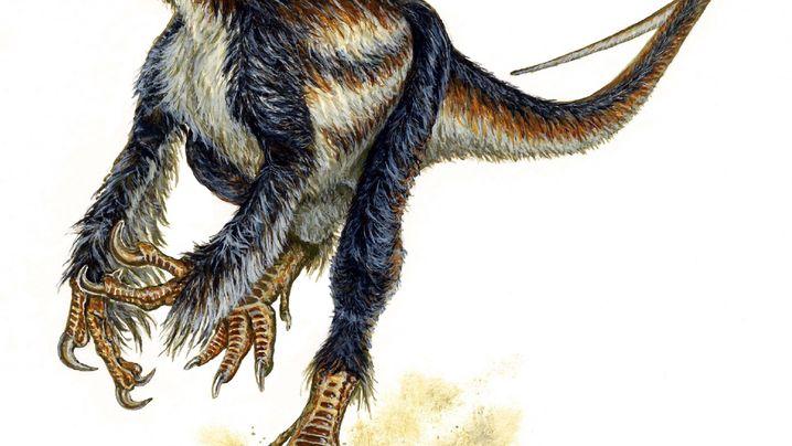 Gefiederte Dinosaurier: Wie nasse Hühner