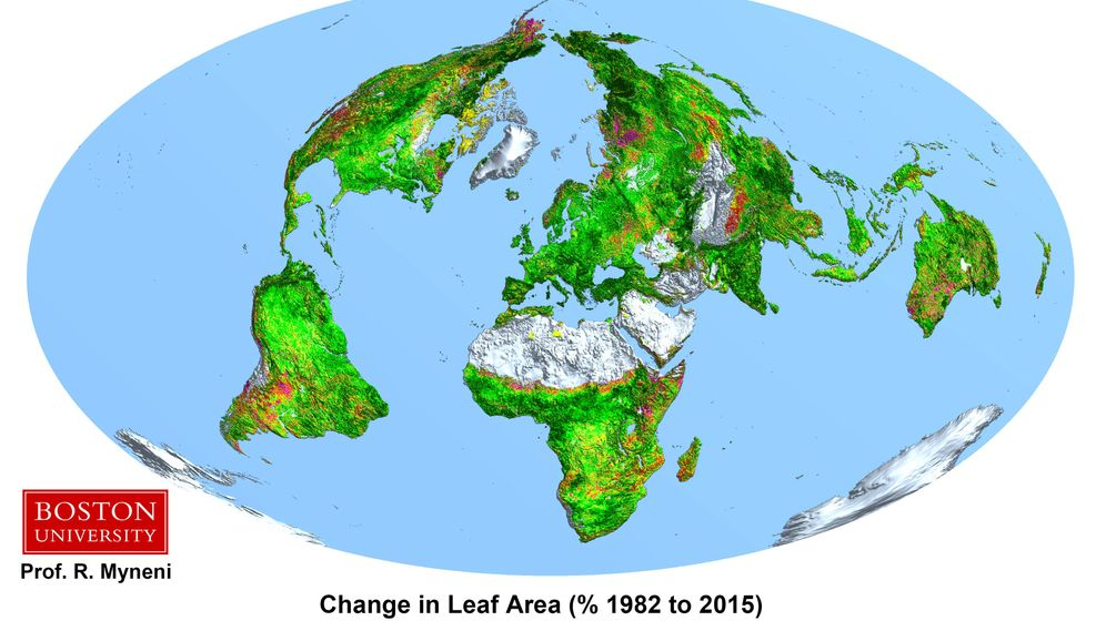 Klimawandel: CO2 düngt die Wälder