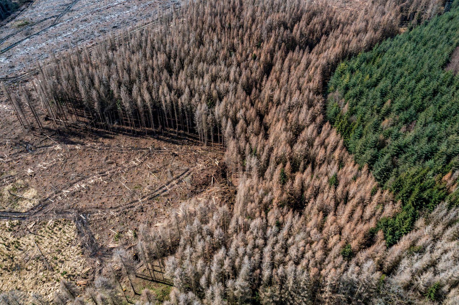 Gebiet im Arnsberger Wald bei Warstein-Sichtigvor, Kreis Soest, Gelände eines Fichtenwald der auf Grund von starken Bork