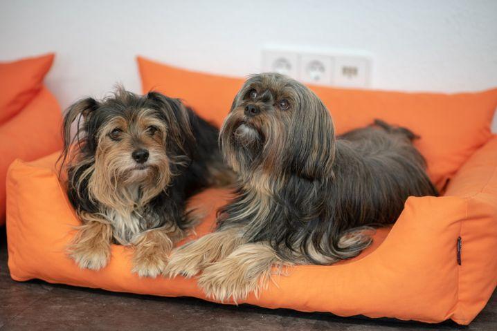 Anja Kühnbaums Hunde Joey und Coco