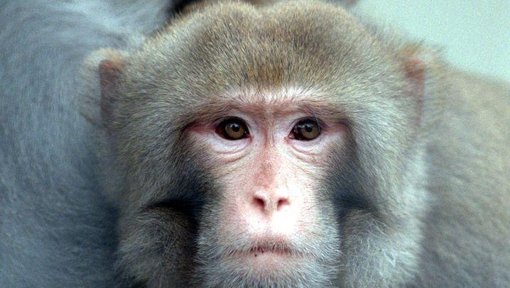 Kluge Tiere: Mengenlehre bei Affe und Co.
