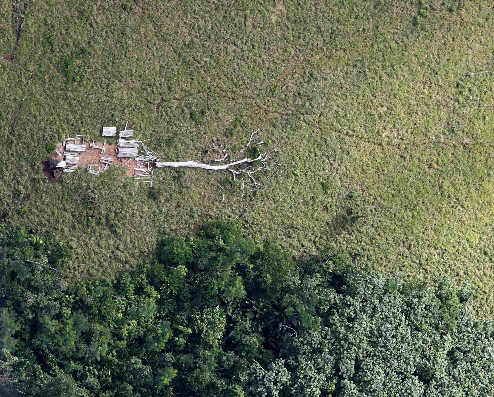 Amazonas/Entwaldung