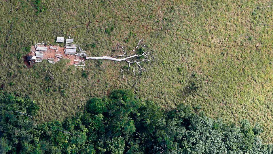 Regenwald (Archivbild von 2009): Waldfläche von der Größe Großbritanniens verloren
