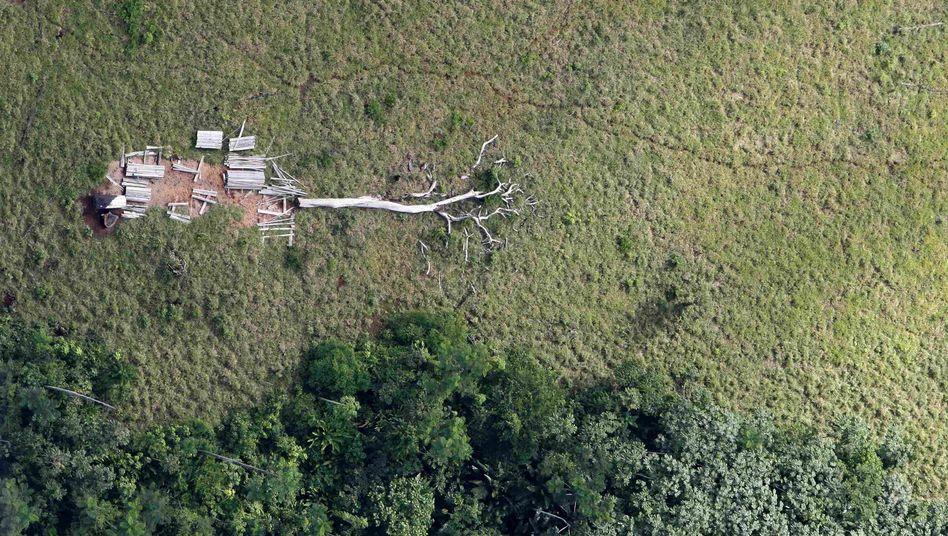 """Regenwald-Abholzung in Brasilien: """"Die Staaten haben viel Geld versprochen"""""""