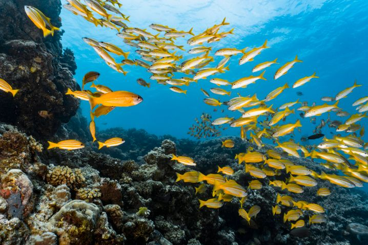 Korallen bilden wichtige Ökosysteme, sind aber weltweit vom Aussterben bedroht
