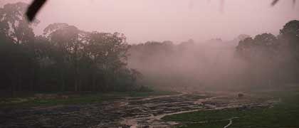 Elefanten im Nebel: Tierart voller Geheimnisse