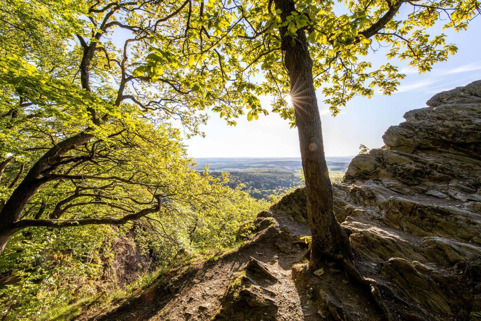 Frühsommerwetter im Taunus 06.05.2020, Glashütten (Hessen): Die Sonne scheint im Wald mit Buchen am Großen Zacken im Ta