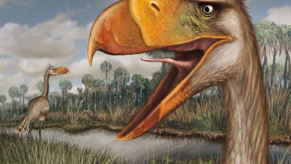 Neuer Terrorvogel: Kleiner, krächzender Killer