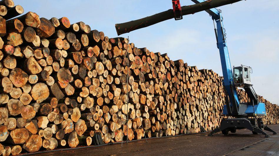 Gefällte Bäume in Mecklenburg-Vorpommern