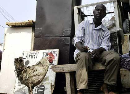 Geflügel in Nigeria: Vogelgrippe erstmals in Afrika nachgewiesen