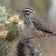 Zahl der Vögel in Nordamerika ist um ein Viertel gesunken