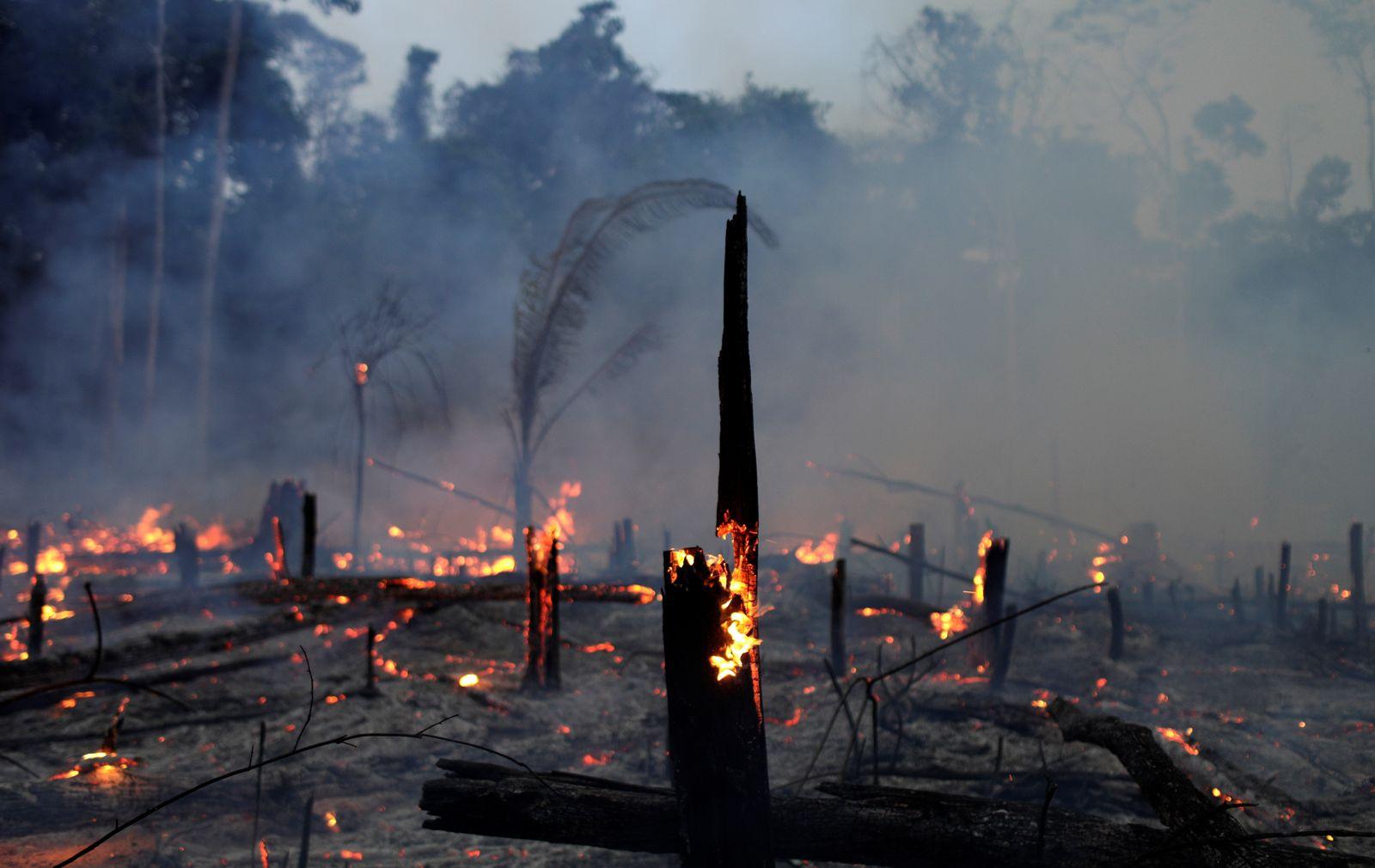 Brasilien / Regenwald / Feuer
