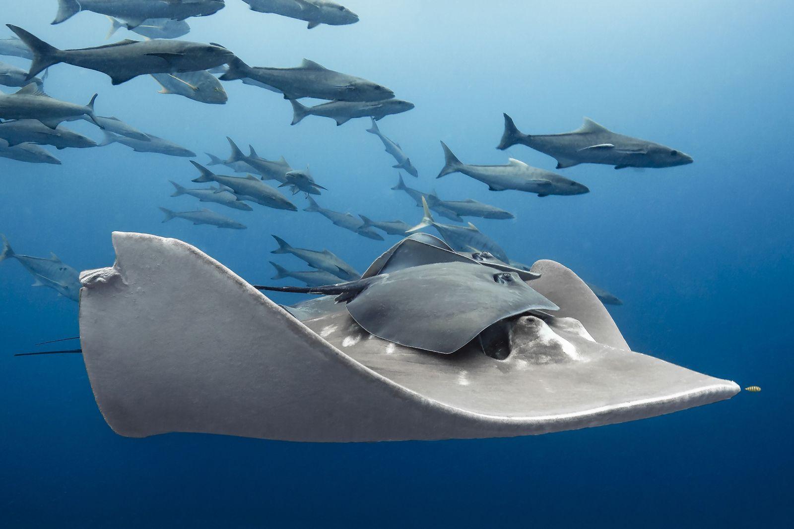 Marine Life Behavior1_Paula_Vianna_A friendly ride