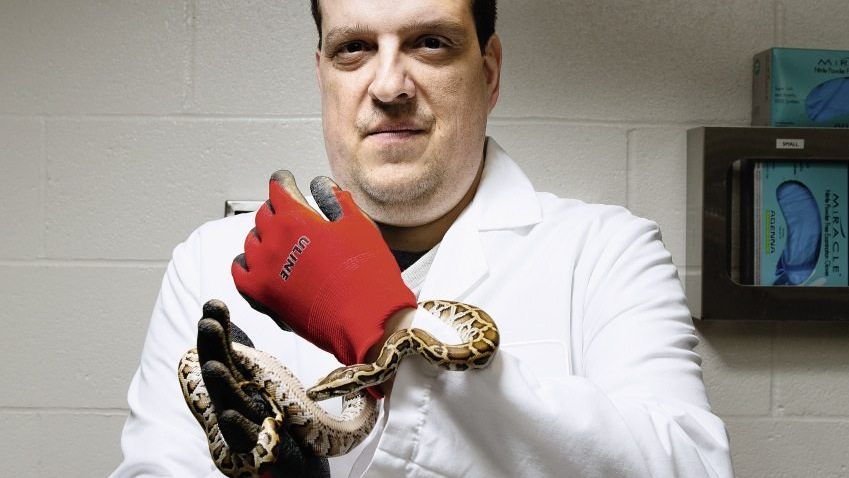 Chirurg Stylopoulos, Versuchs-Python