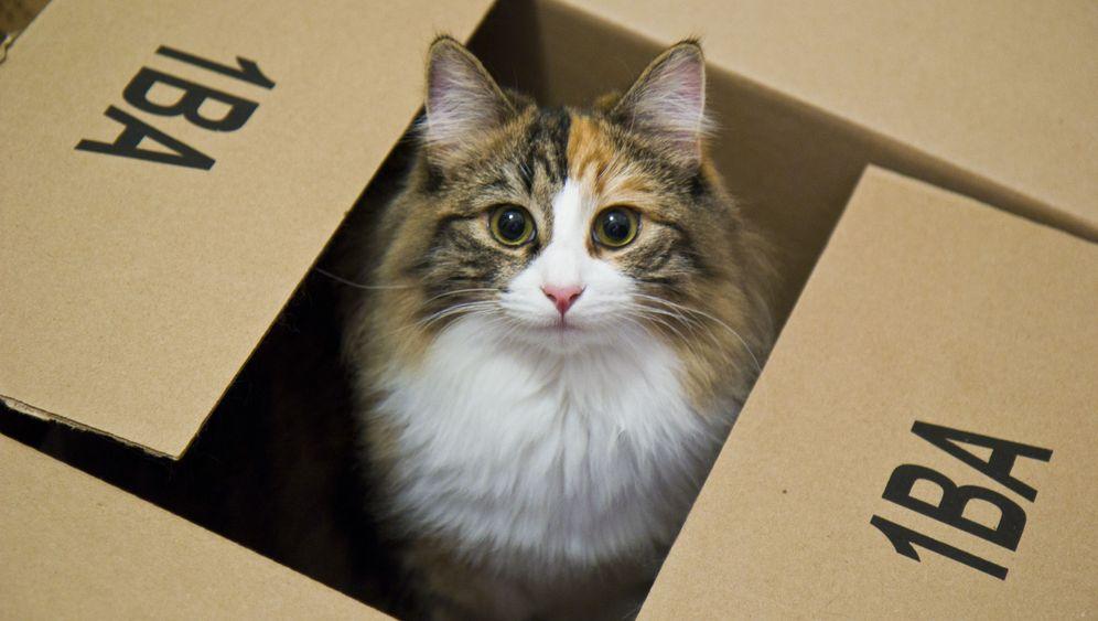 Katzen: Bei Angst ab in die Kiste