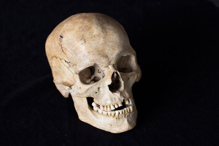 14.000 Jahre alter Schädel aus Norditalien