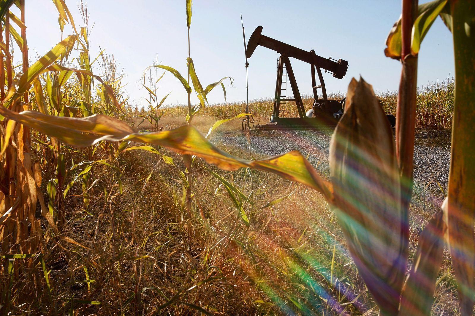 Kornfeld / Öl-Pumpe