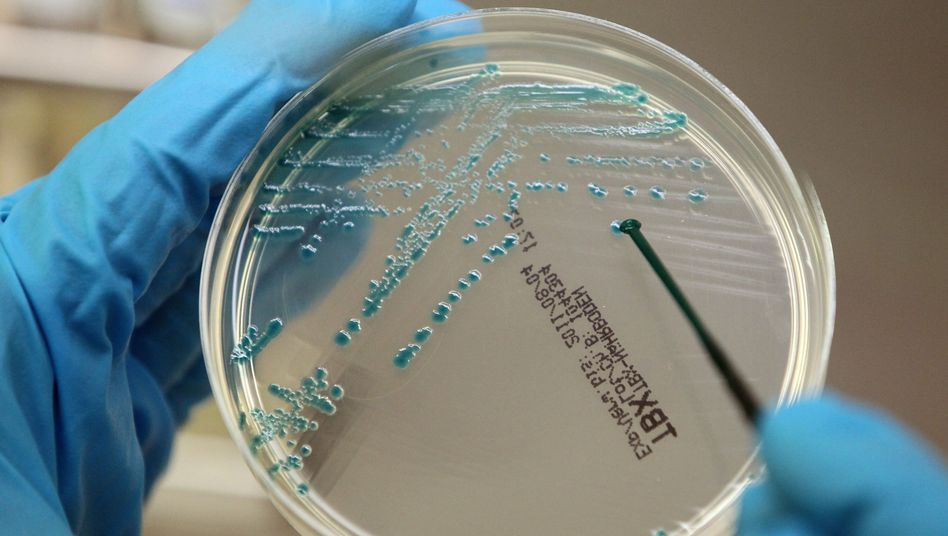 Ehec-Kolonien auf einer Petrischale: Zweifel an Schnelltest