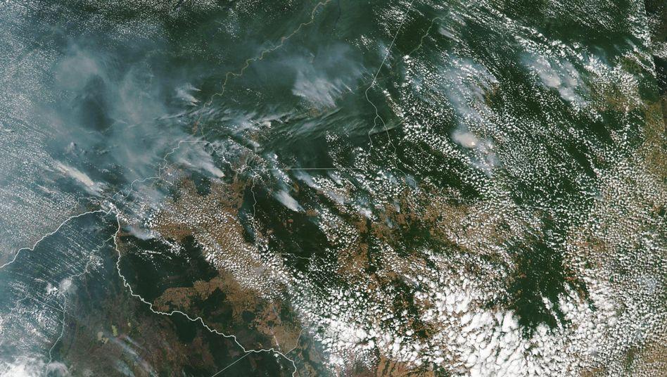 Satellitenbild des Regenwaldes: Rodung in einem Jahr um 30 Prozent gestiegen