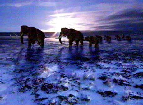 Mammuts (Simulation): Gewebeproben von der russischen Mafia gekauft
