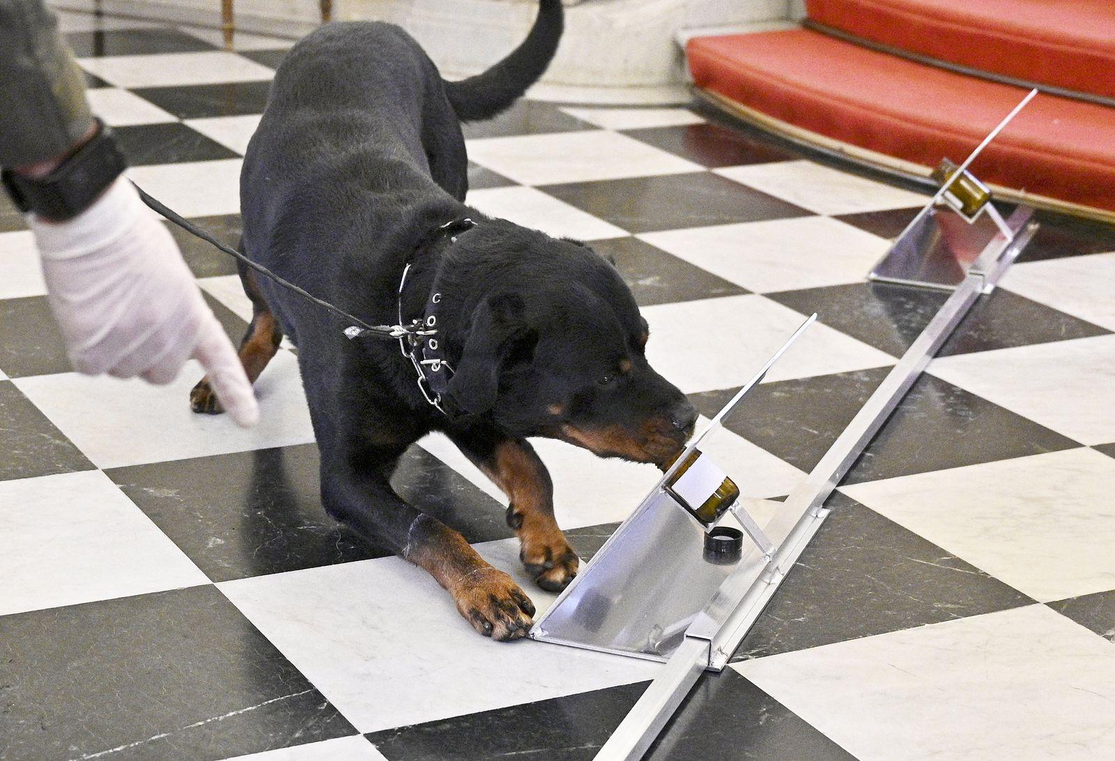Corona-Spürhunde bei den Wiener Sängerknaben