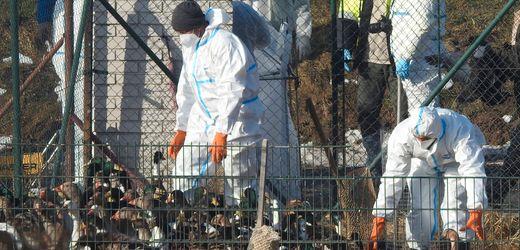 Vogelgrippe H5N8 im Menschen: »Wir sollten die Situation ernst nehmen, sie aber auch nicht überbewerten«