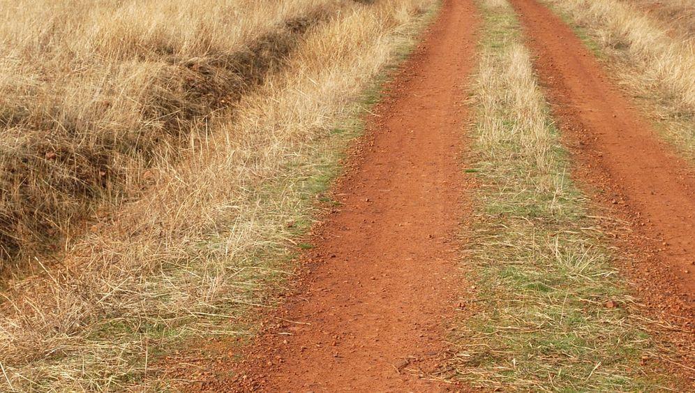 Cabañeros-Nationalpark: In der Serengeti Spaniens