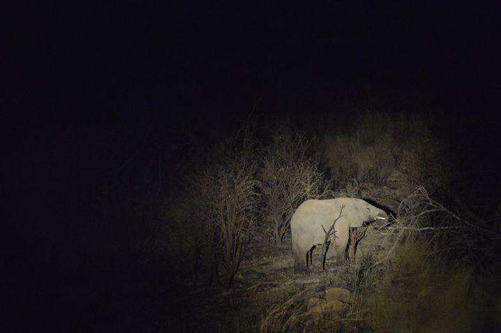 Elefant beim nächtlichen Fressen in Südafrika (Archivbild)