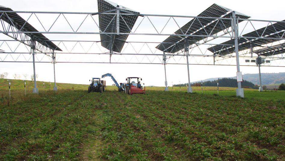 Landwirtschaftliche Nutzung und Energieerzeugung versöhnen: Unter den fünf Meter hohen Solar-Gestellen bleibt genug Raum für Traktoren, und die Module lassen einen Teil der Sonneneinstrahlung und ausreichend Regen zum Boden durch