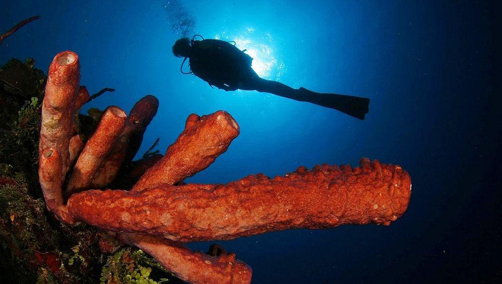 Tauchen in Kuba: Durch den Kamin in die Tiefe