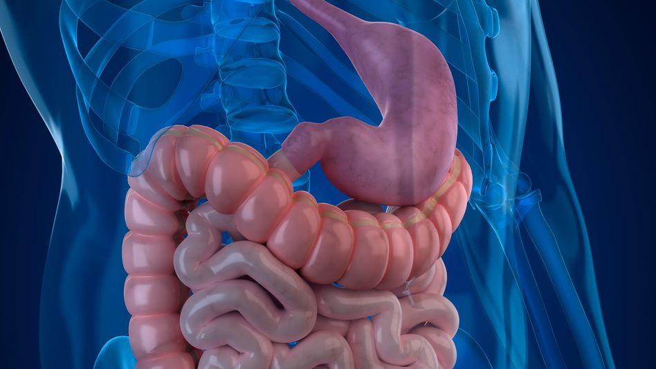 Darm: Unser Verdauungssystem beherbergt bis zu 1000 Bakterienarten