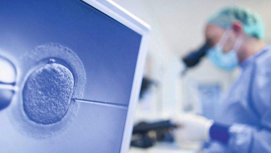 Befruchtung im Labor
