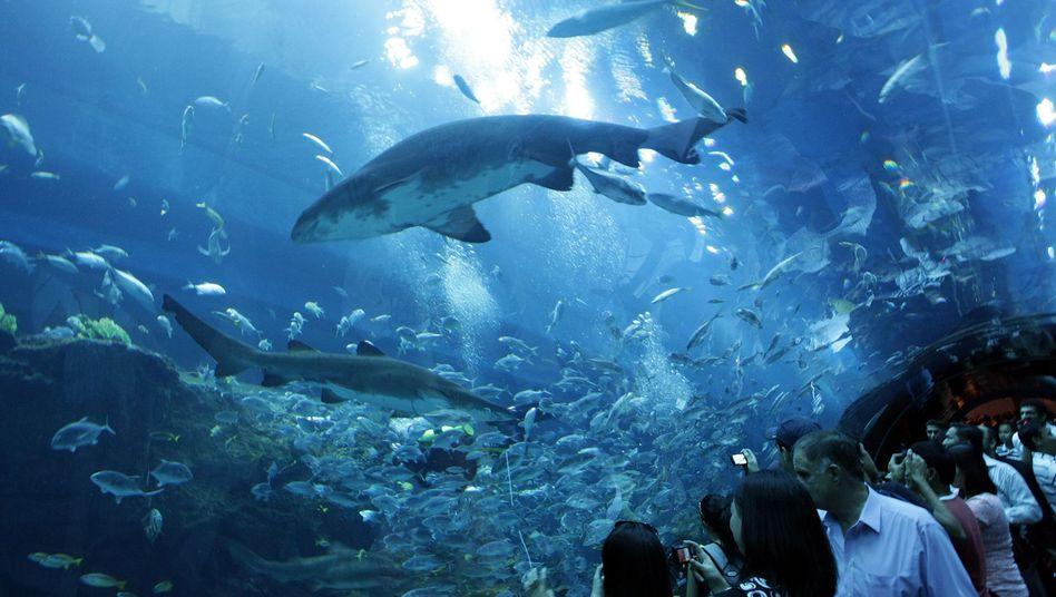 Aquarium in Dubai: Sprung in der Scheibe
