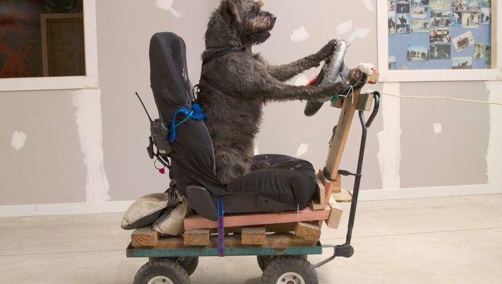 Fahrschule für Hunde: Pfote am Schaltknauf