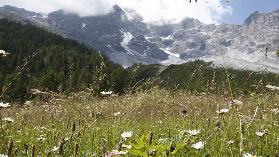 Ein Campertraum: Wandern in den Alpen, Schnorcheln in Kroatien, Schlemmen in Italien