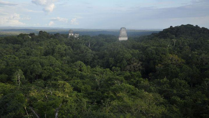 Maya-Stätte: Vogelperspektive - aber ohne Bäume