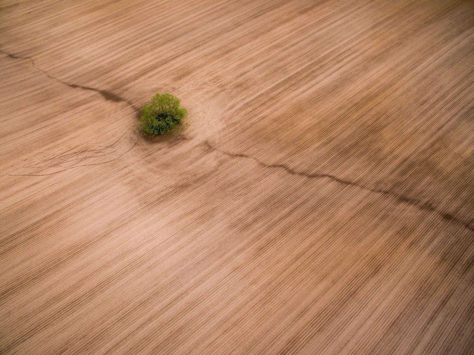 Einzelner Baum steht auf einem Feld
