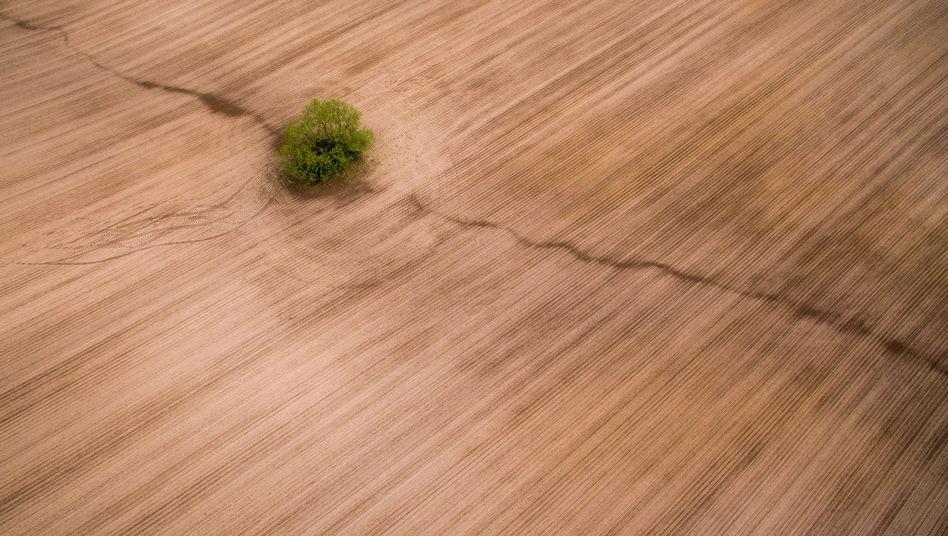 Ein leeres Feld mit einem Baum bei Langenleuba in Sachsen