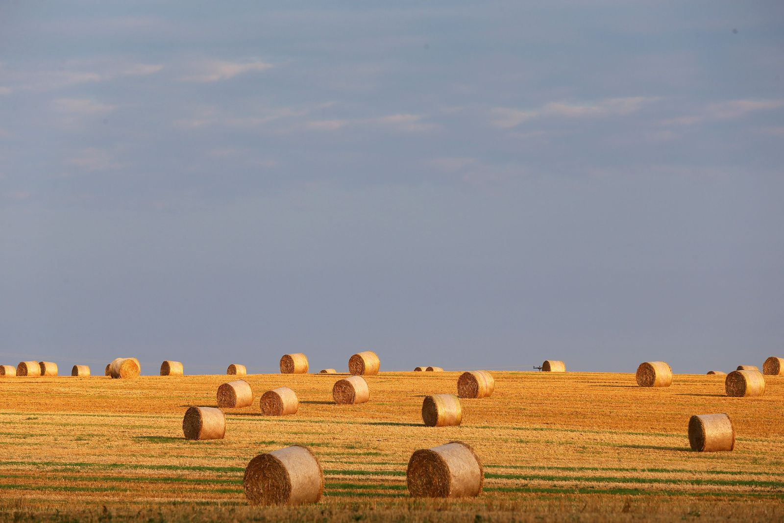Getreide / Weizen-Feld / Lebensmittel