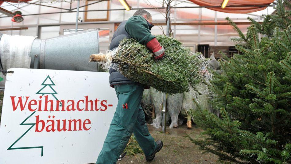 Weihnachtsbaumverkäufer in Niedersachsen (Archivbild)