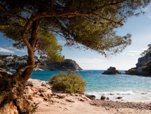 Traum vieler Deutscher: Mallorca