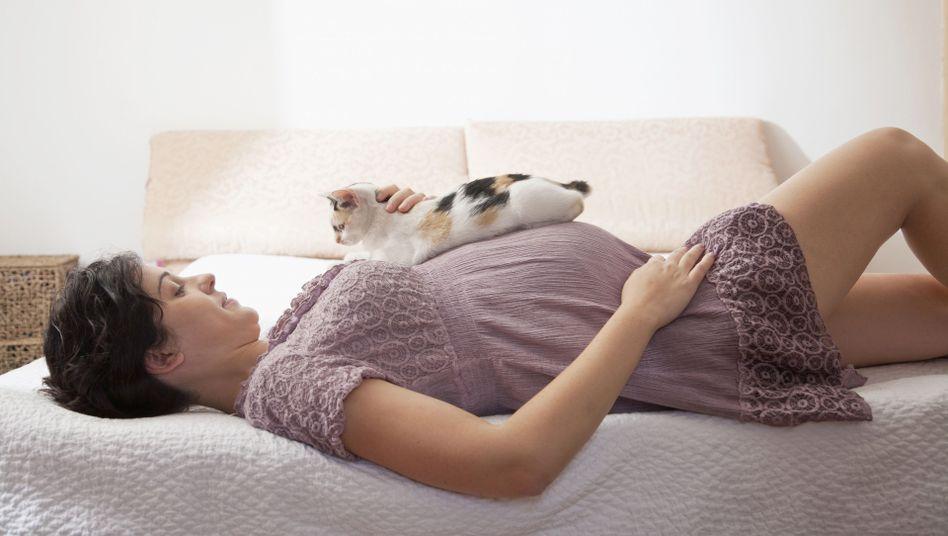 Vorsicht beim Kuscheln: Katzen können Toxoplasmose übertragen