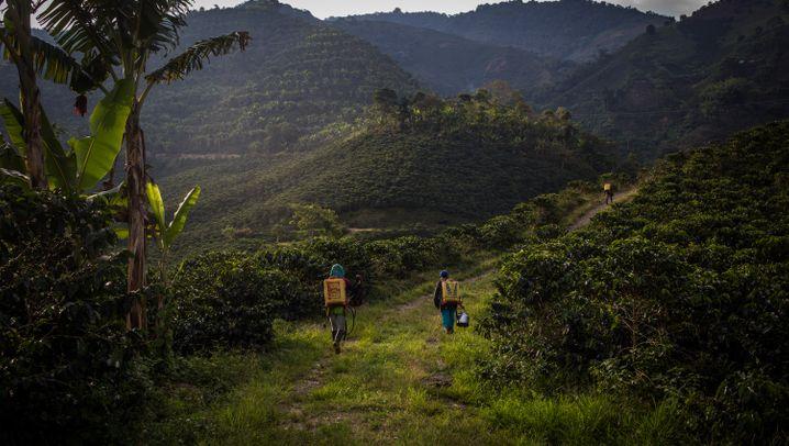 Kolumbiens Kaffeeplantagen: Wo indigene Transfrauen sich sicher fühlen